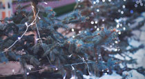 Identifying Problems & Barriers: Christmas Light Display