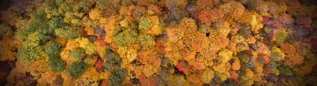 Fall Daylight Savings Social Media Graphics