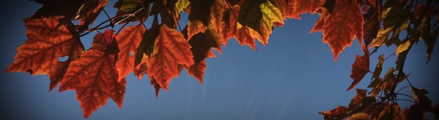 5 Fall Kickoff Tips for Church Communicators